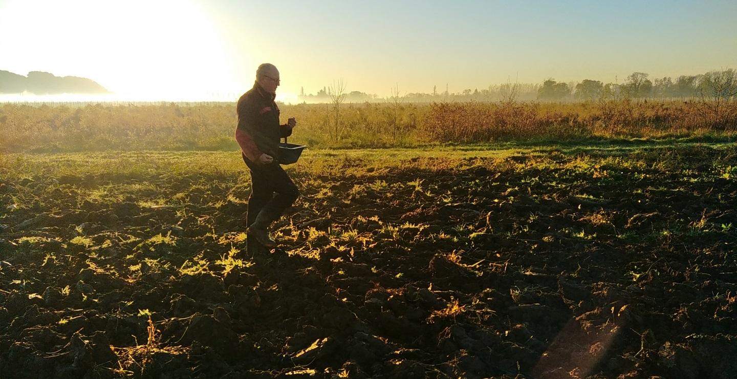 Olivier Reumaux semant des engrais verts