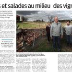 Poules et salades aumilieu des vignes - article Sud Ouest du 21 mars 2021